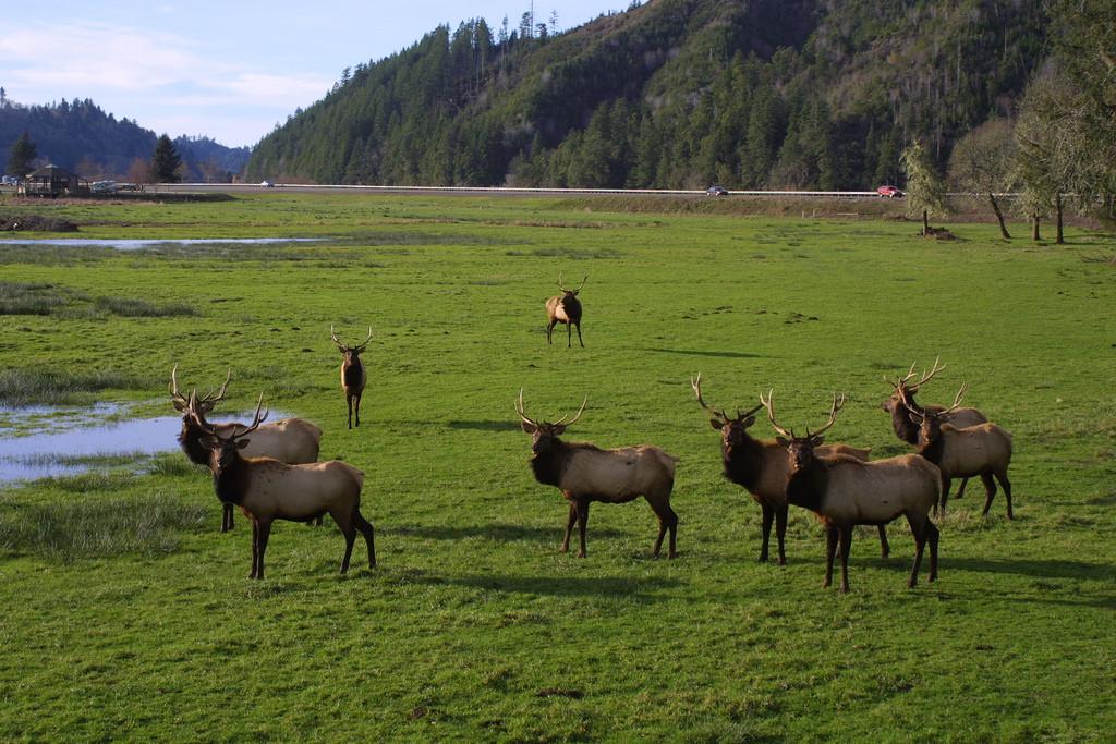 Dean Creek Elk Viewing Area by BLMOregon, on Flickr