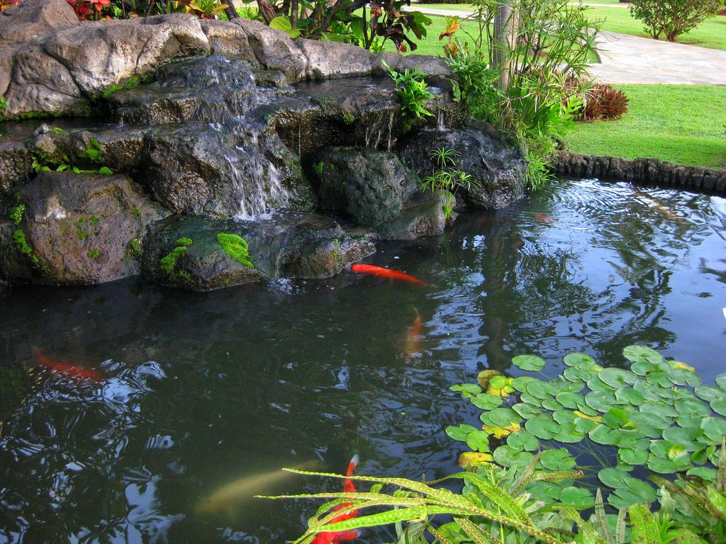 Kauai Koi Pond by Mr.Thomas, on Flickr