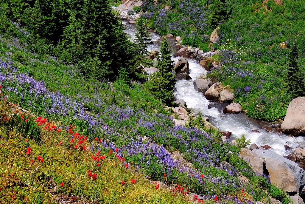 Native plants on Forest Service lands in by USDAgov, on Flickr