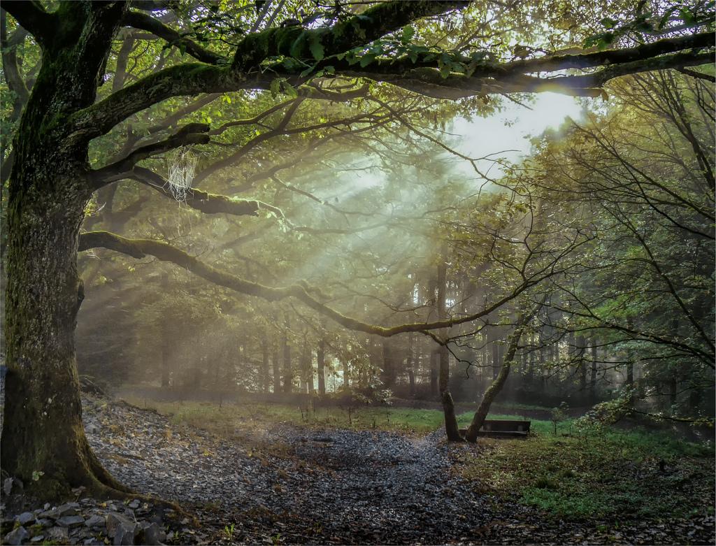 Licht by Norbert Reimer, on Flickr