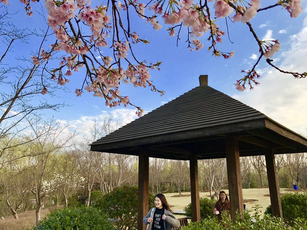 顾村公园--樱花园,早樱与亭� by DvYang, on Flickr