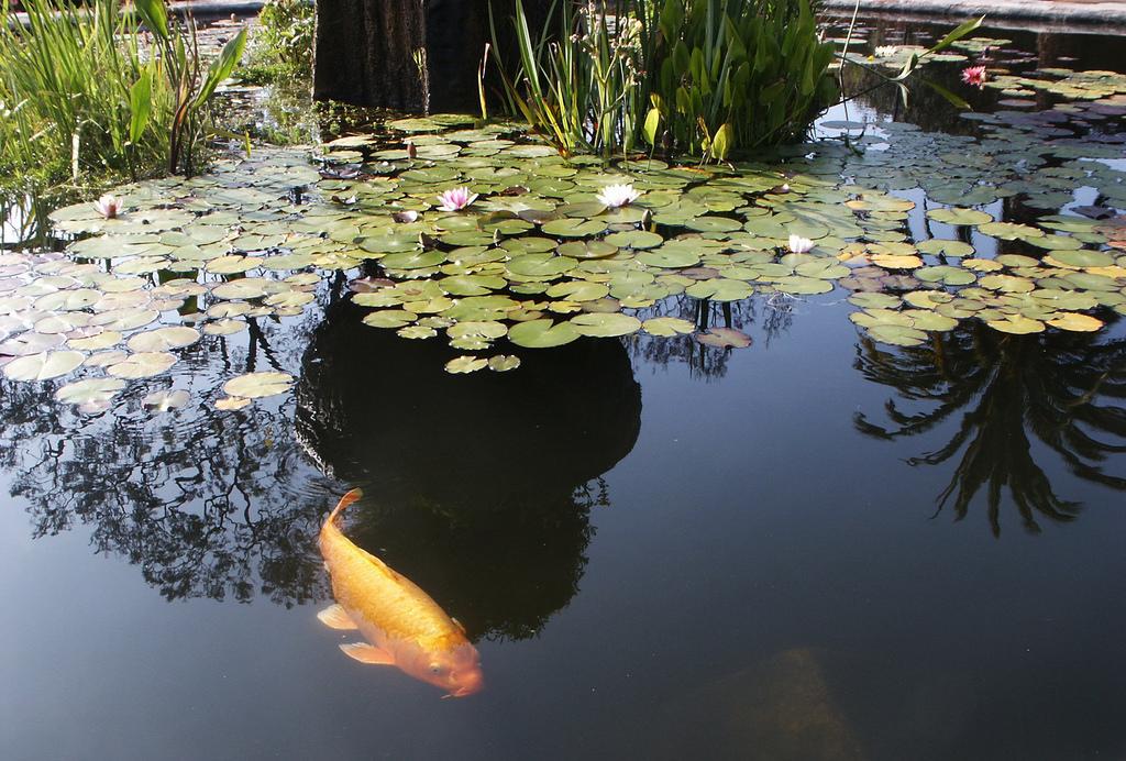 Mission San Juan Capistrano Koi Pond by DominusVobiscum, on Flickr