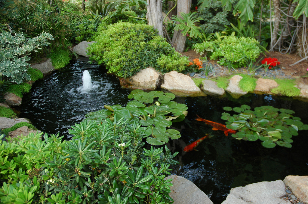 Fountain, koi fish, garden, Koi Pond, Me by Wonderlane, on Flickr