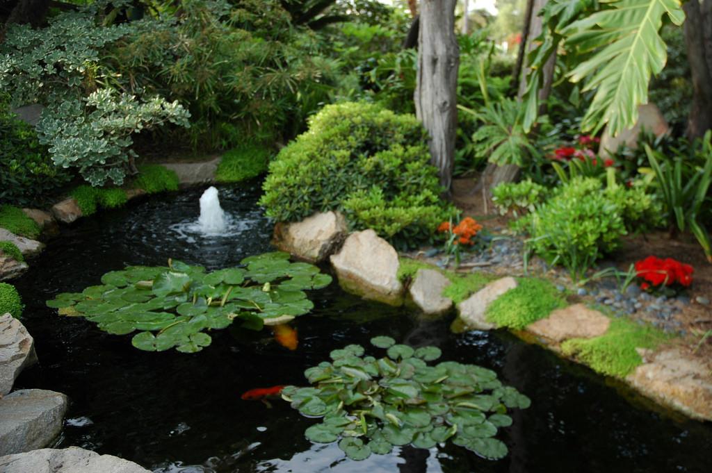 Fountain, koi fish, lotus lily pads, gar by Wonderlane, on Flickr