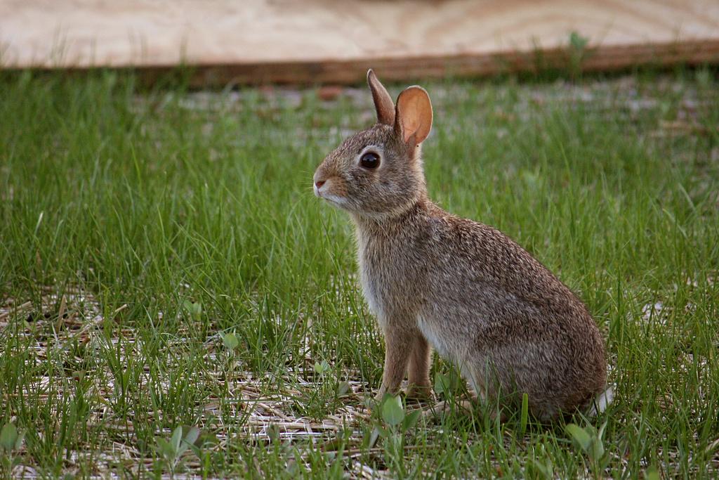 Rabbit by Marit & Toomas Hinnosaar, on Flickr