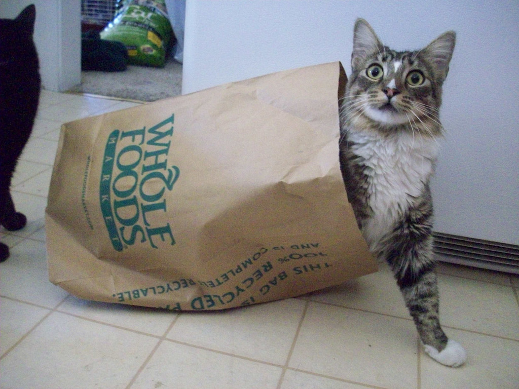 Playing in a Paper Bag by AlishaV, on Flickr