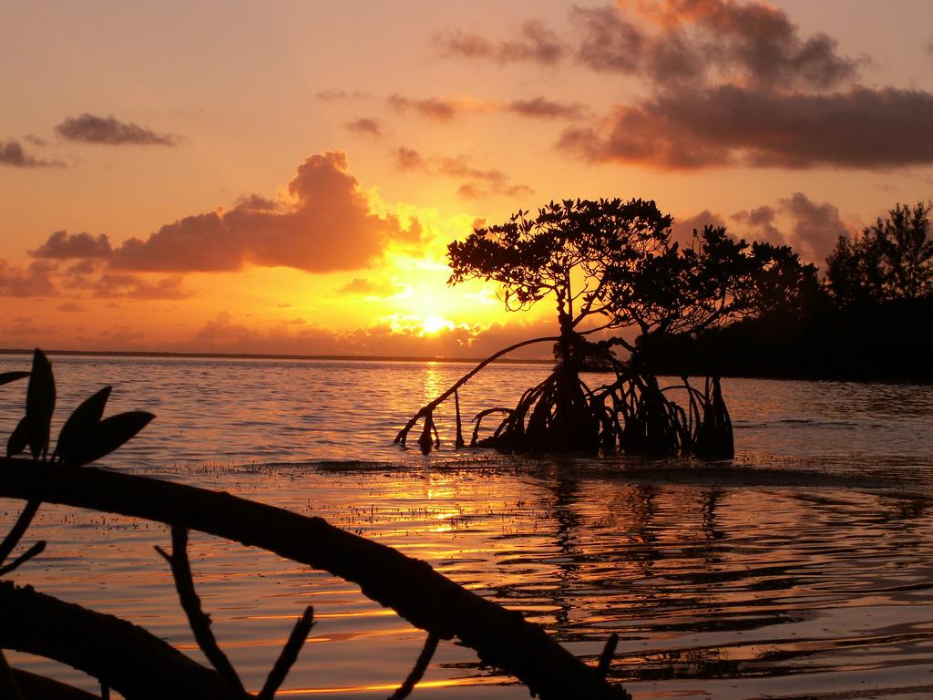 mangrove sunrise by Monica R., on Flickr