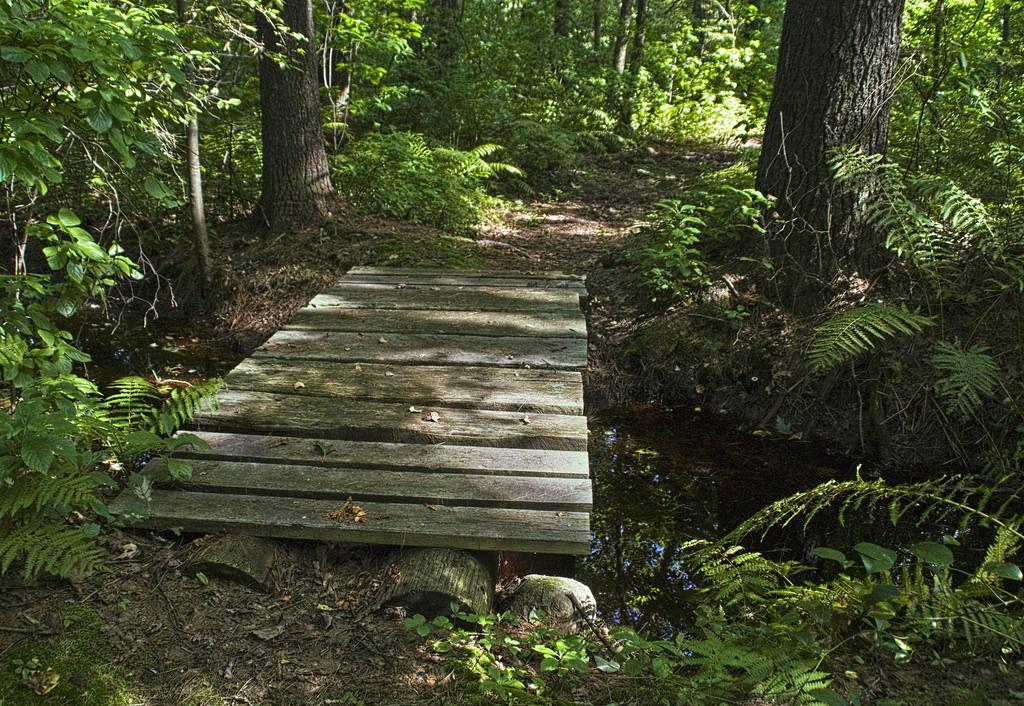 woodland bridge by Muffet, on Flickr