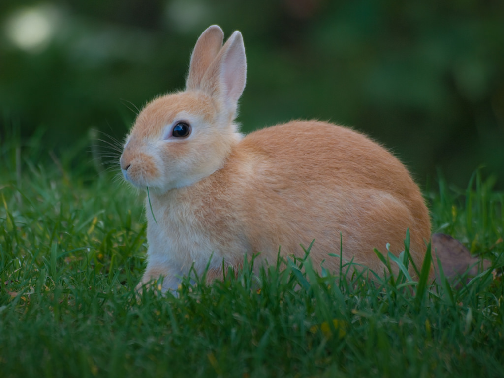 Bunny Rabbit by wwarby, on Flickr