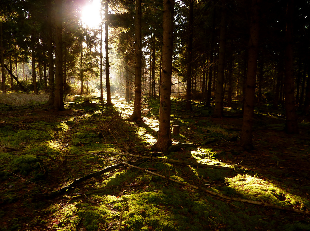 Light in the dark forest by allispossible.org.uk, on Flickr