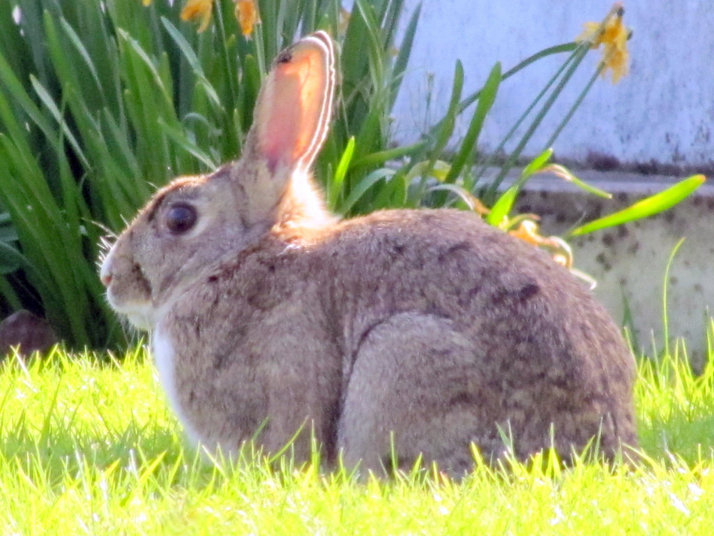 rabbit by Mostly Dans, on Flickr