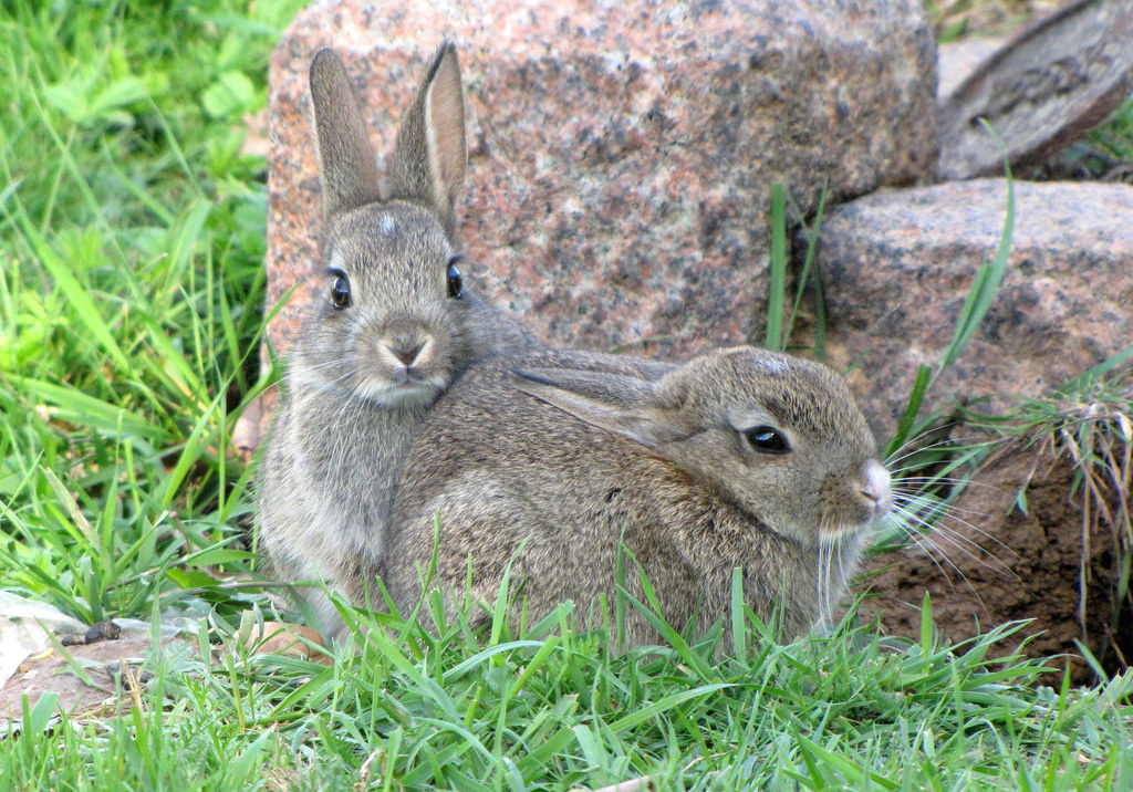 Baby rabbits by jans canon, on Flickr