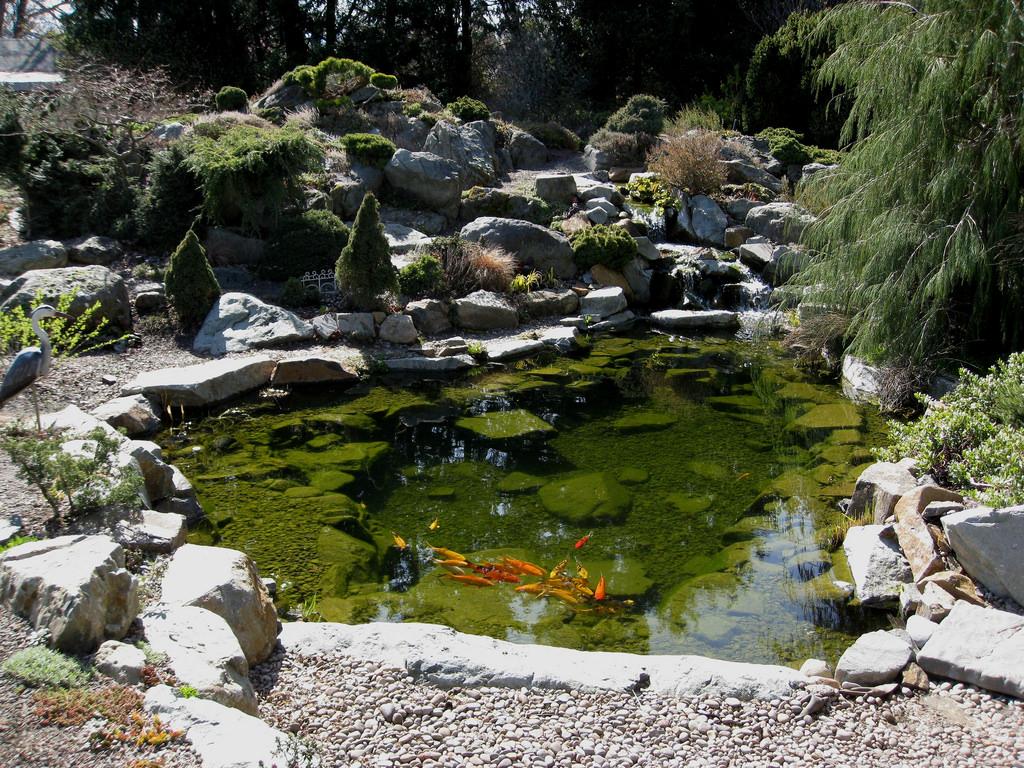Koi Pond by brewbooks, on Flickr
