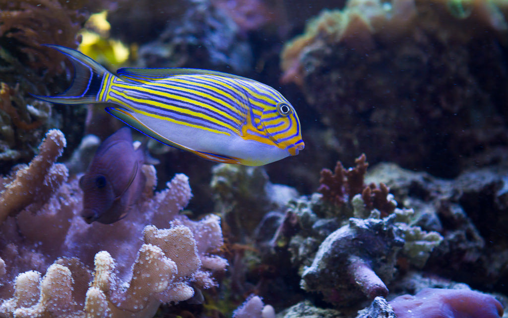 Tropical fish by RogerGoun, on Flickr