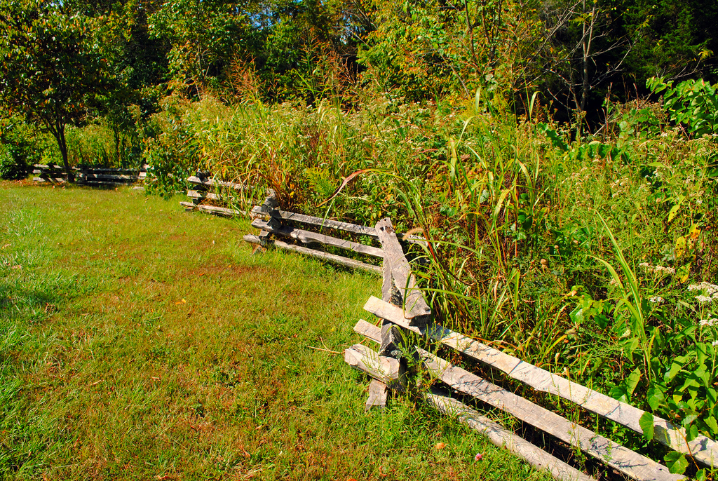 Fence Row by d.boyd, on Flickr