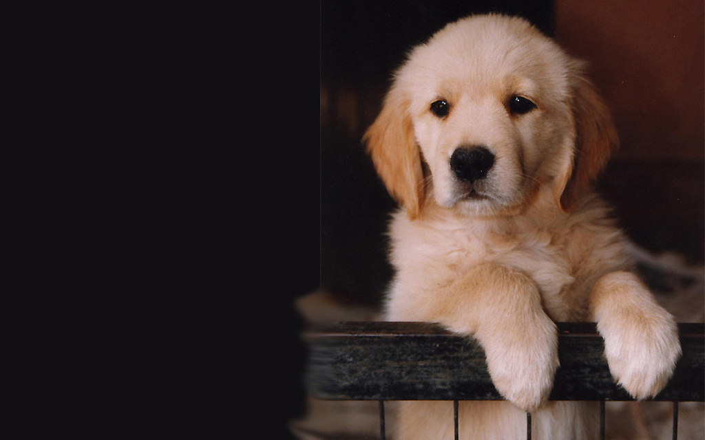 Cute Puppy With Paws by kitty.green66, on Flickr