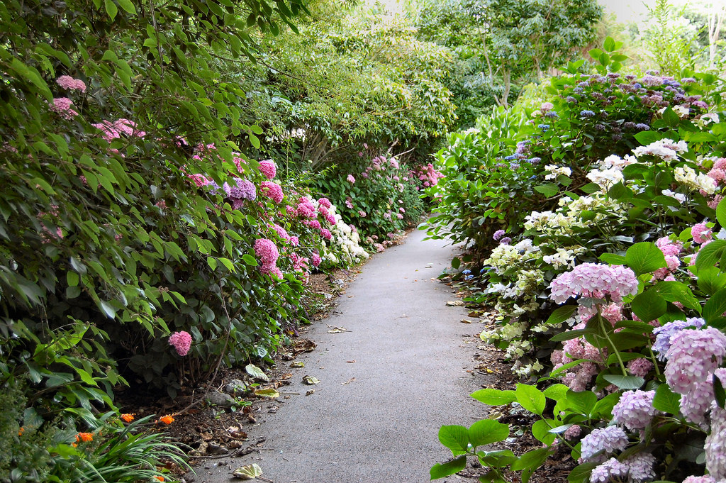 FLOWERY PATH IN VENTNOR. by ronsaunders47, on Flickr