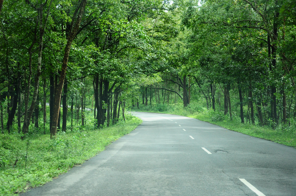 NH-212 - through Bandhipur forest by Kamaljith, on Flickr
