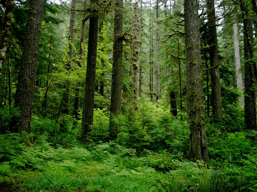 Slow - Coastal Temperate Rainforest by Sam Beebe, on Flickr
