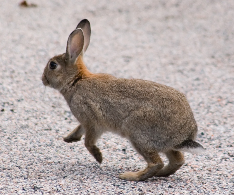 Bunny Blast-Off by Tomi Tapio, on Flickr
