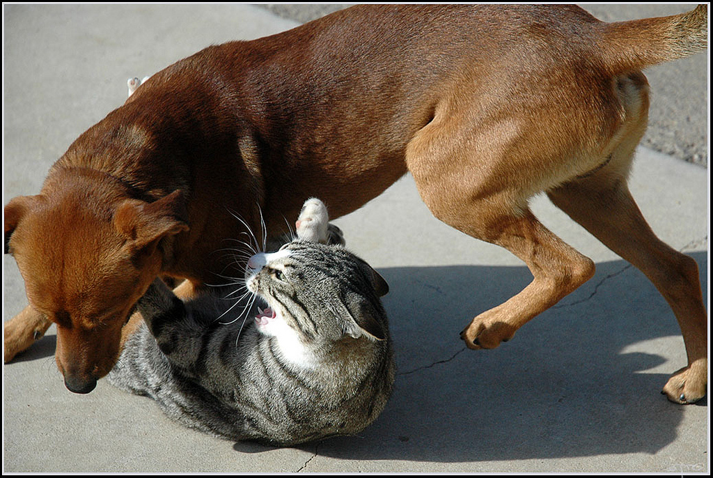 Cat & Dog playing - חתול וכלב מ by Eran Finkle, on Flickr