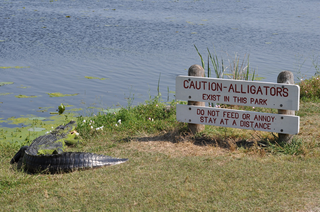 Alligators in Texas Can Read by gertys, on Flickr