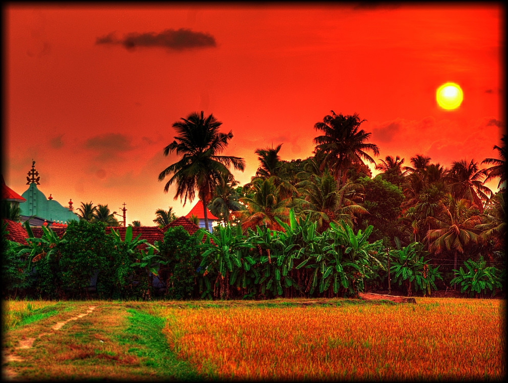 Sunset over the rice fields, Kerala, Ind by Tim Moffatt, on Flickr