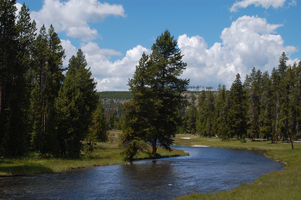 nez-perce-creek-yellowstone-np-july-2010 by Forest Service - Northern Region, on Flickr