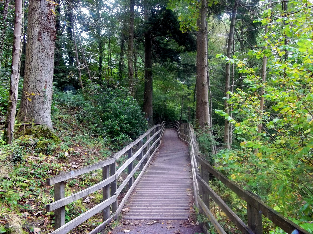 Woodland walk by myeralan, on Flickr