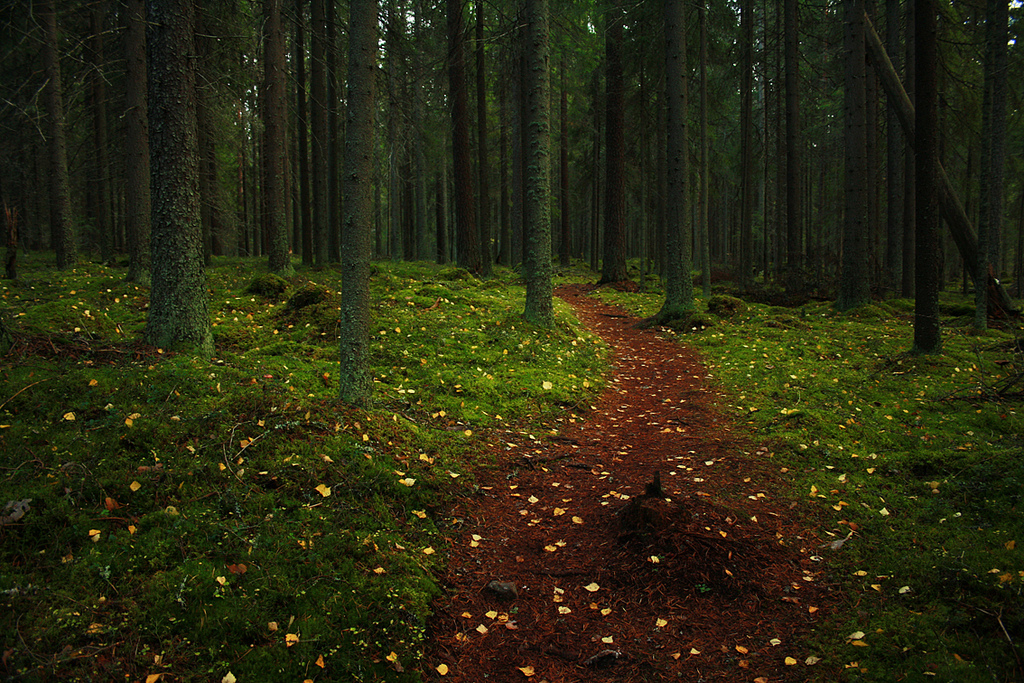 Forest Path by Miguel Virkkunen Carvalho, on Flickr