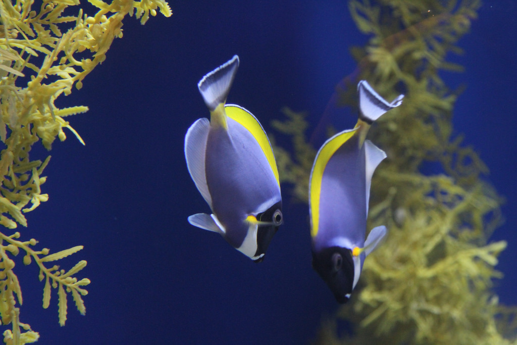 Adventure Aquarium Marine Tropical Fish by Jim, the Photographer, on Flickr
