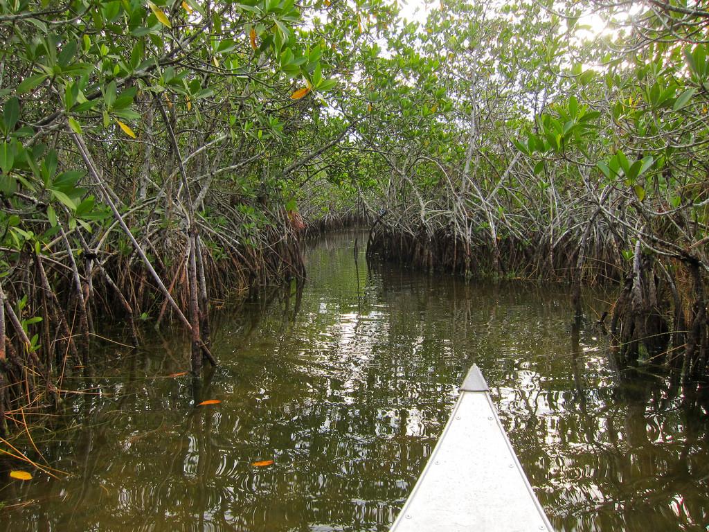 Everglades National Park Nine Mile Pond by MiguelVieira, on Flickr