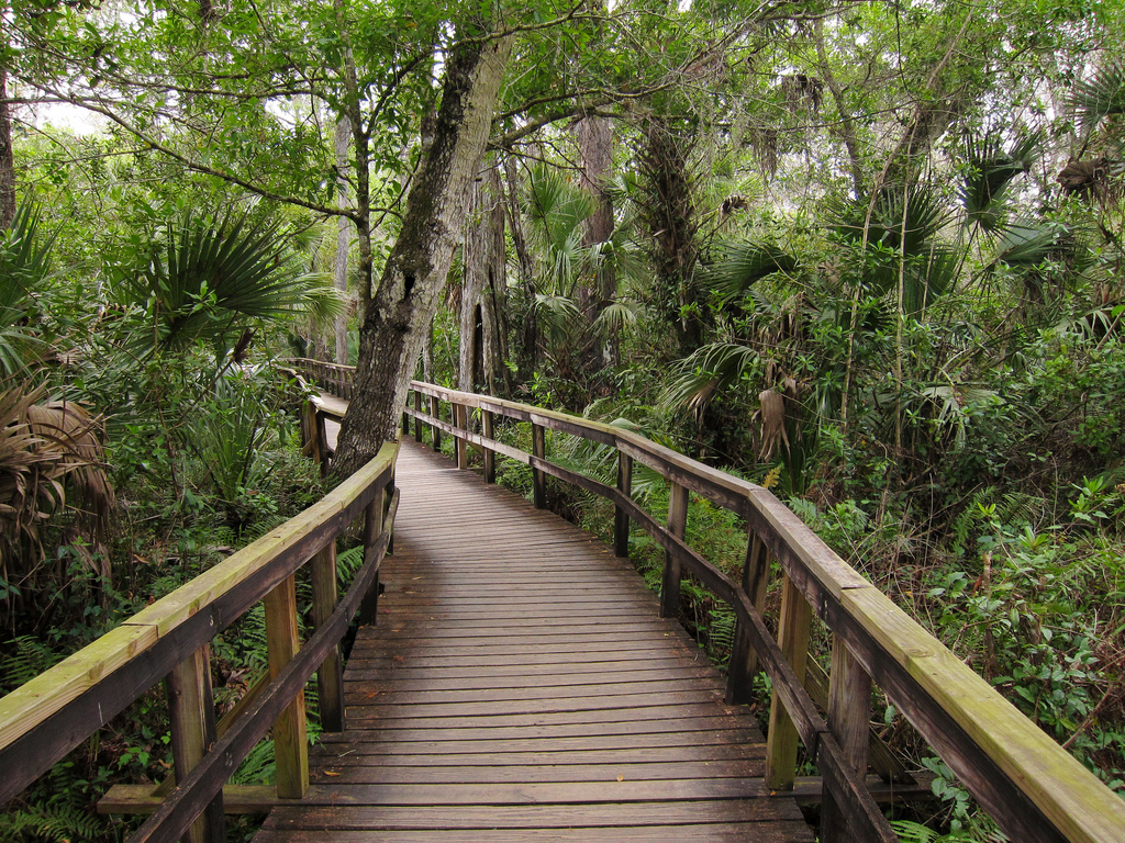 Fakahatchee Strand Preserve State Park B by MiguelVieira, on Flickr