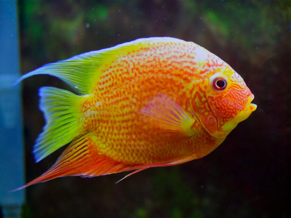 Red Severum by Chun