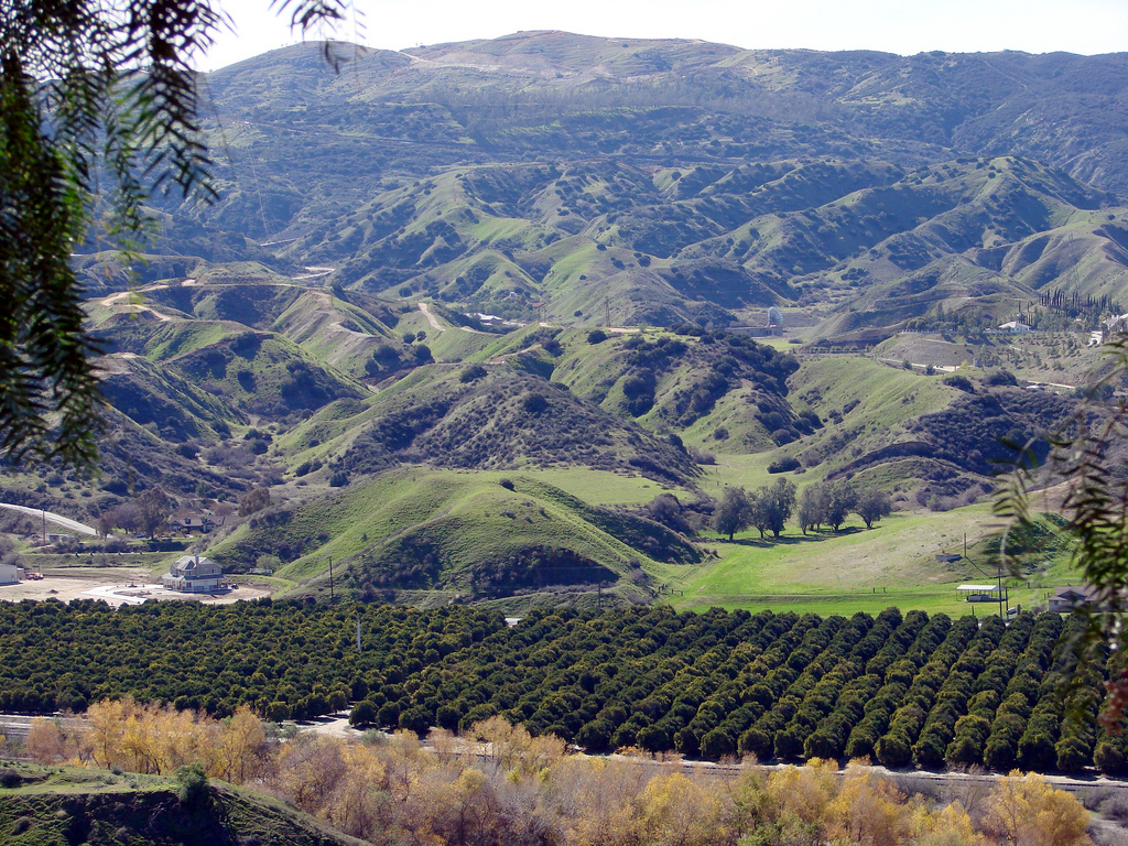San Timoteo Canyon Groves, Redlands, CA by inkknife_2000 (8 million views +), on Flickr