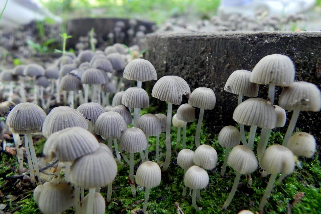 Magic Mushrooms by SolomonVipe, on Flickr