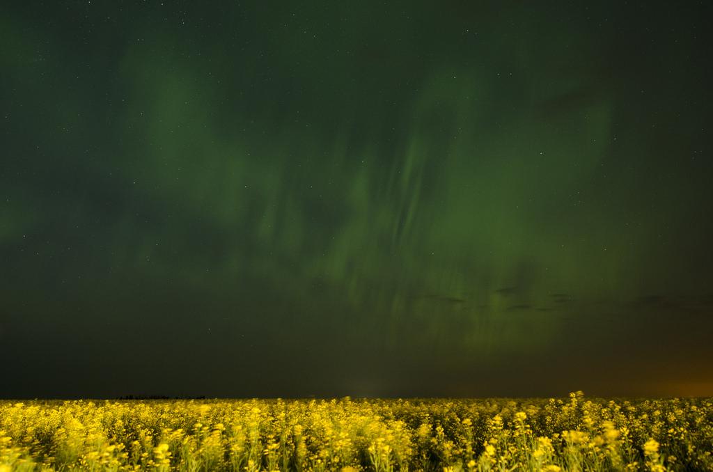 Aurora over Canola fields in Alberta by WherezJeff, on Flickr