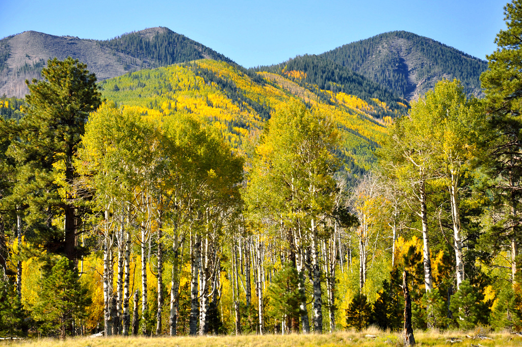 Lockett Meadow Sept 25, 2012 by Coconino National Forest, on Flickr