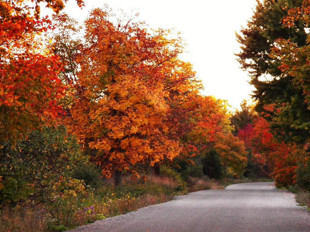 Country-Road-Fall by Chris Sorge, on Flickr
