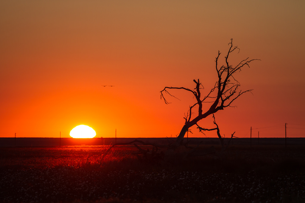 Sunrise: West Texas Style by StuSeeger, on Flickr
