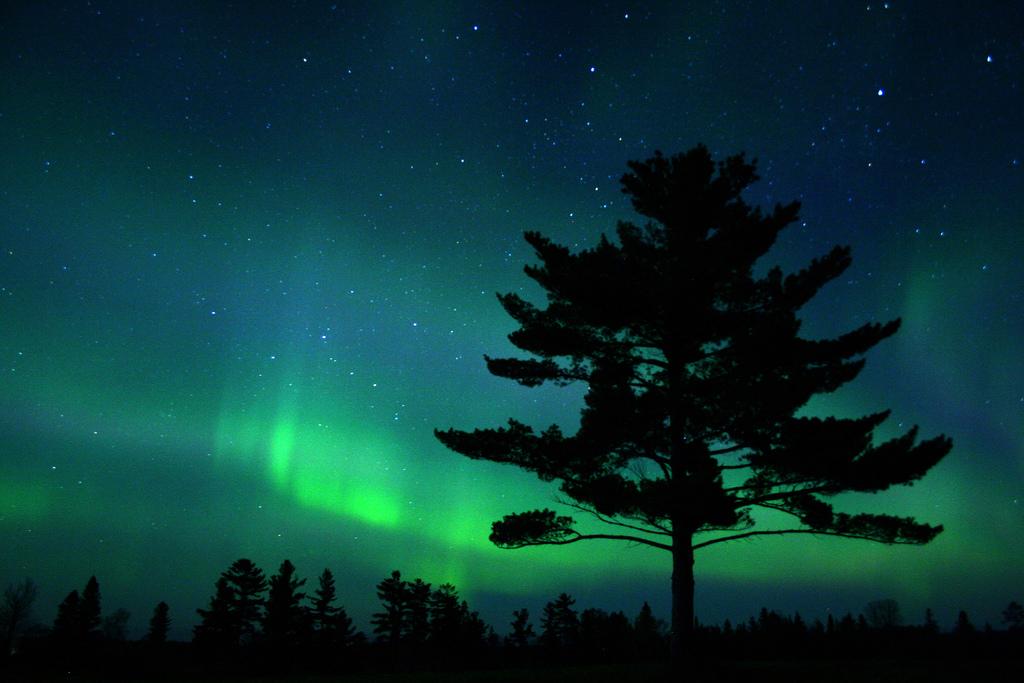 White-Pine-Aurora by Charlie Stinchcomb, on Flickr