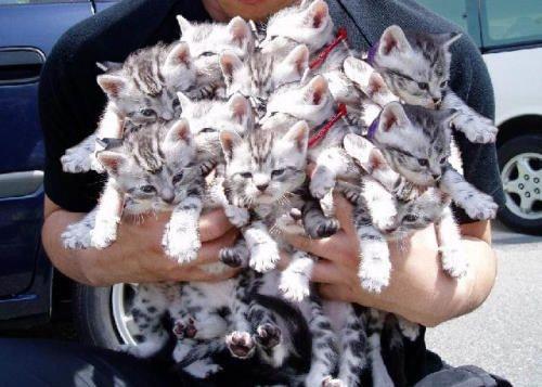 kittens kittens kittens by adinaplus, on Flickr