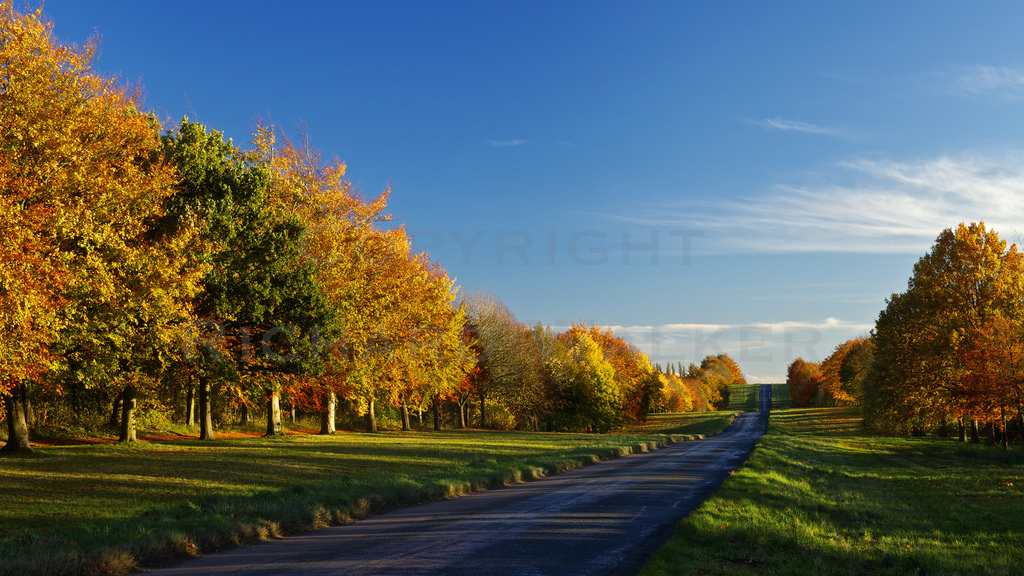 Autumn Road by Richard Walker Photography, on Flickr