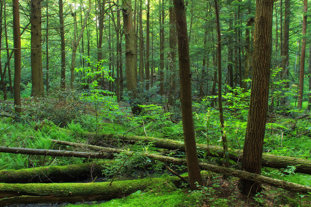 Palustrine Forest (1) by Nicholas_T, on Flickr