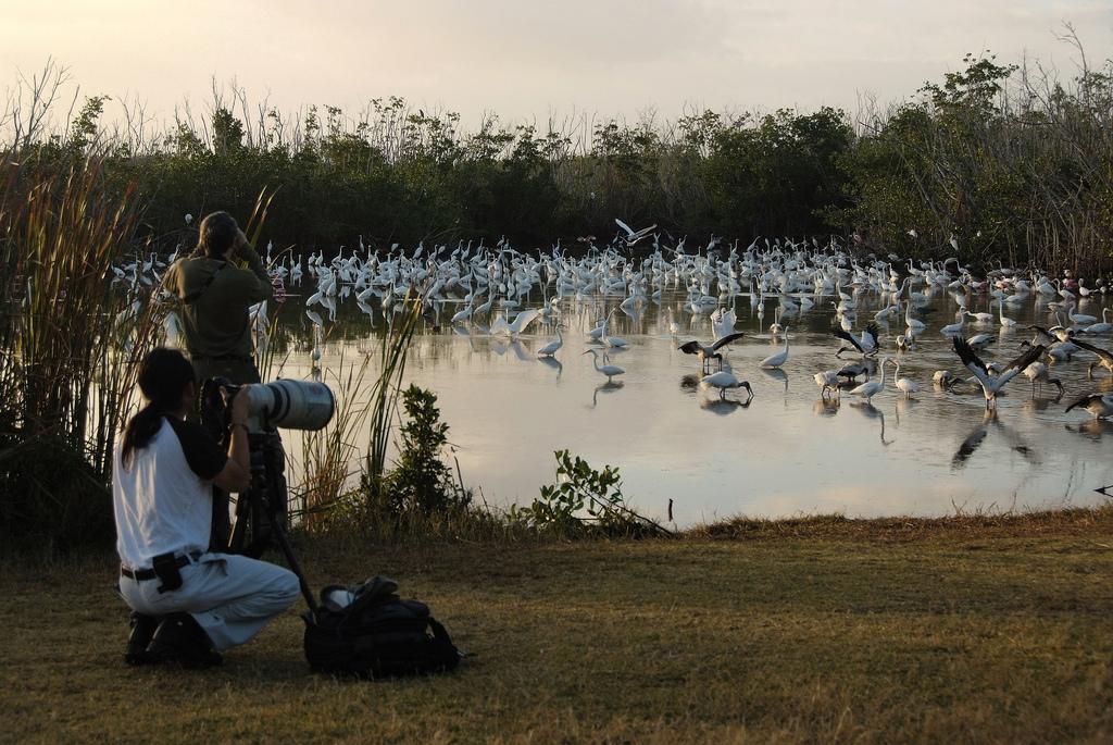 Birding- Mrazek Pond, NPSPhoto, by evergladesnps, on Flickr