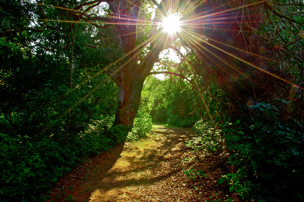 sunburst on a tropical forest path taken by Steve Slater (used to be Wildlife Encounters), on Flickr