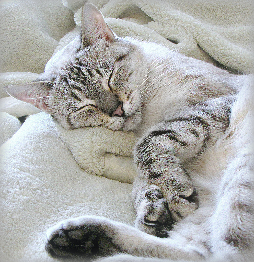 Sweet Sleeping SuzieQ by Trish Hamme, on Flickr
