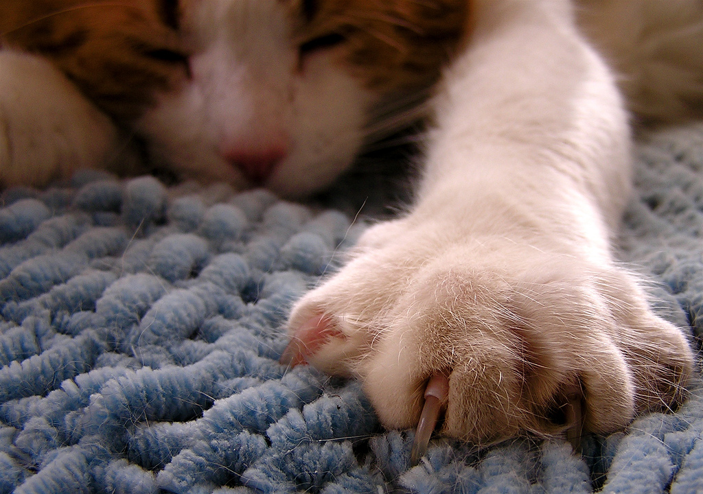 sleeping cat by Muffet, on Flickr