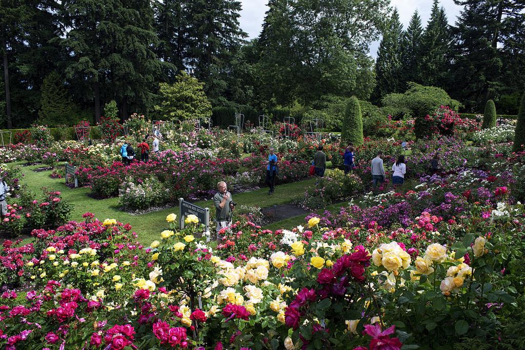The Rose Garden Portland Oregon by Kayaker Bill, on Flickr