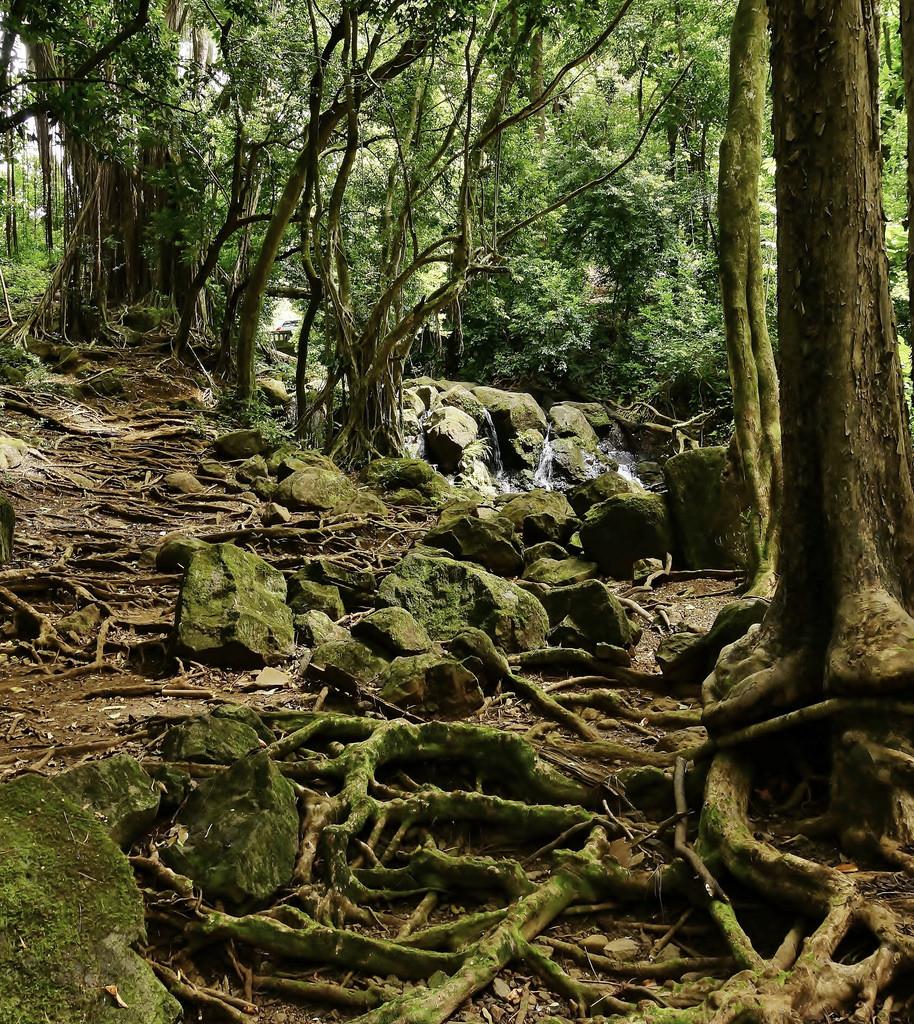 Nuuanu Pali Judd Hiking Trail Hawaii by Eric Tessmer, Honolulu Hawaii, on Flickr